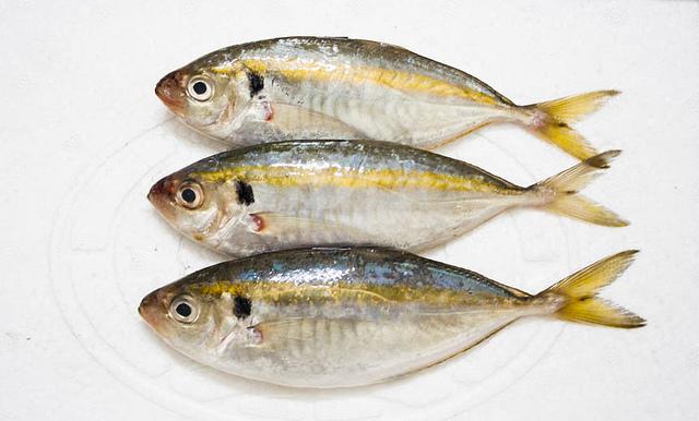 Cá chỉ vàng tươi